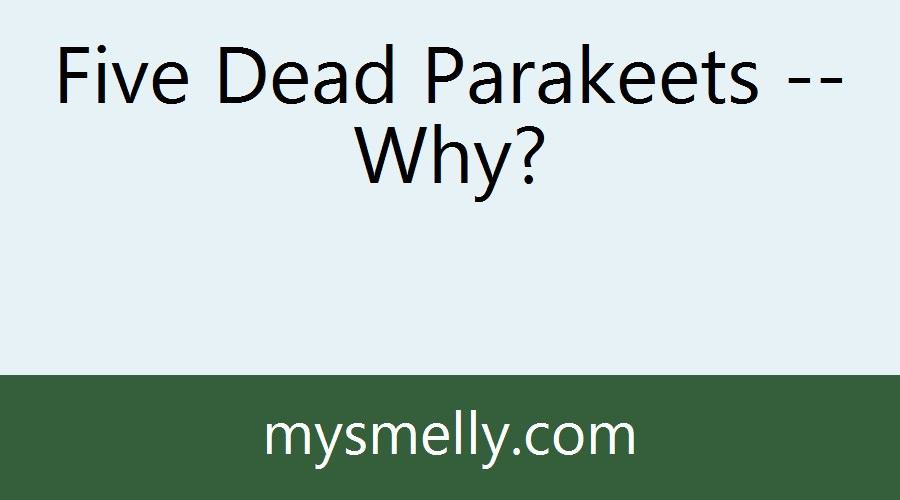 Five Dead Parakeets -- Why?